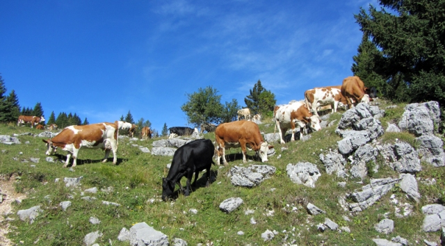 Animali in pericolo, venti razze a rischio d'estinzione in Toscana, l'allarme della Fao