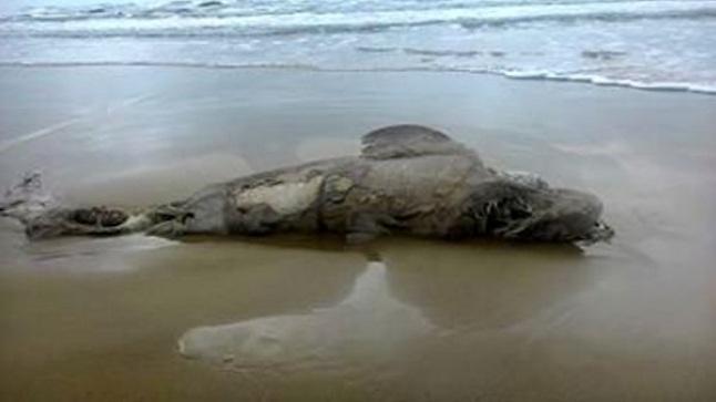 Sicilia, squalo ritrovato in spiaggia a Siculiana. Fonte foto: Agrigentonotizie